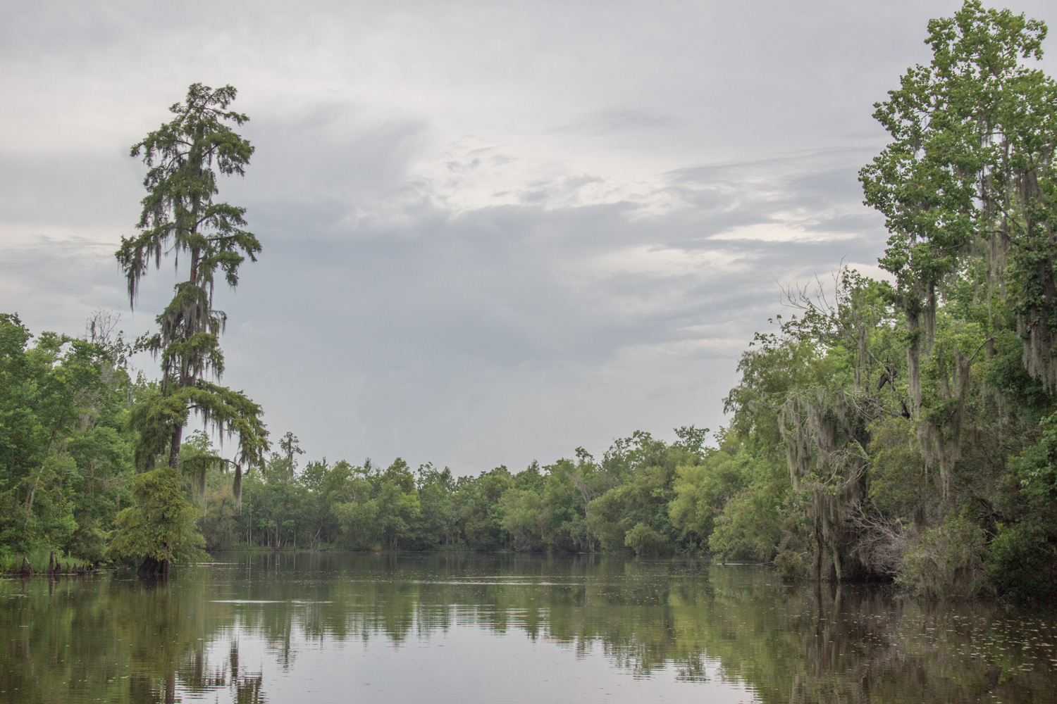 https://i1.wp.com/digital-photography-school.com/wp-content/uploads/2018/12/lightroom-range-mask-nature-photos-bayou-original.jpg?resize=1500%2C1000&ssl=1