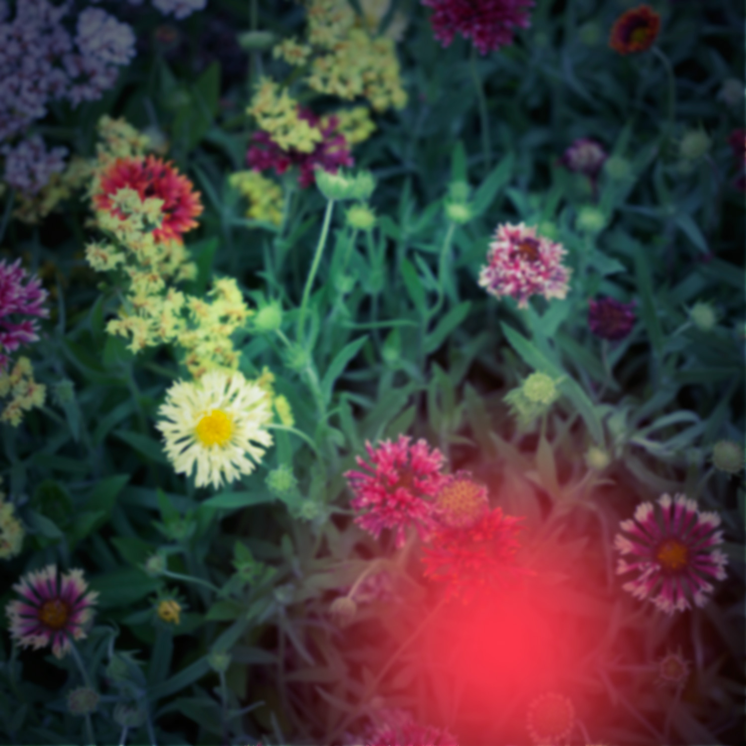 How to Add a Toy Camera Effect to Your Digital Images Using Photoshop