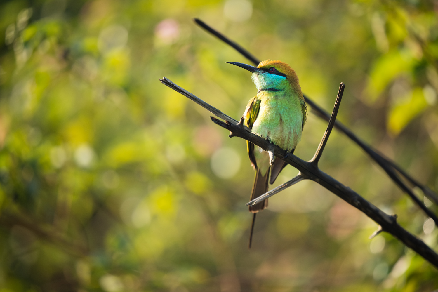 5 - 7 Mistakes to Avoid When Photographing Wildlife