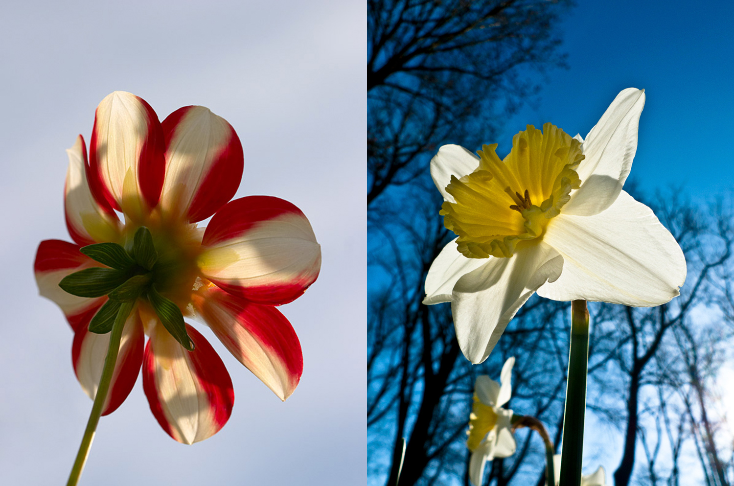 Low angle photography - flowers