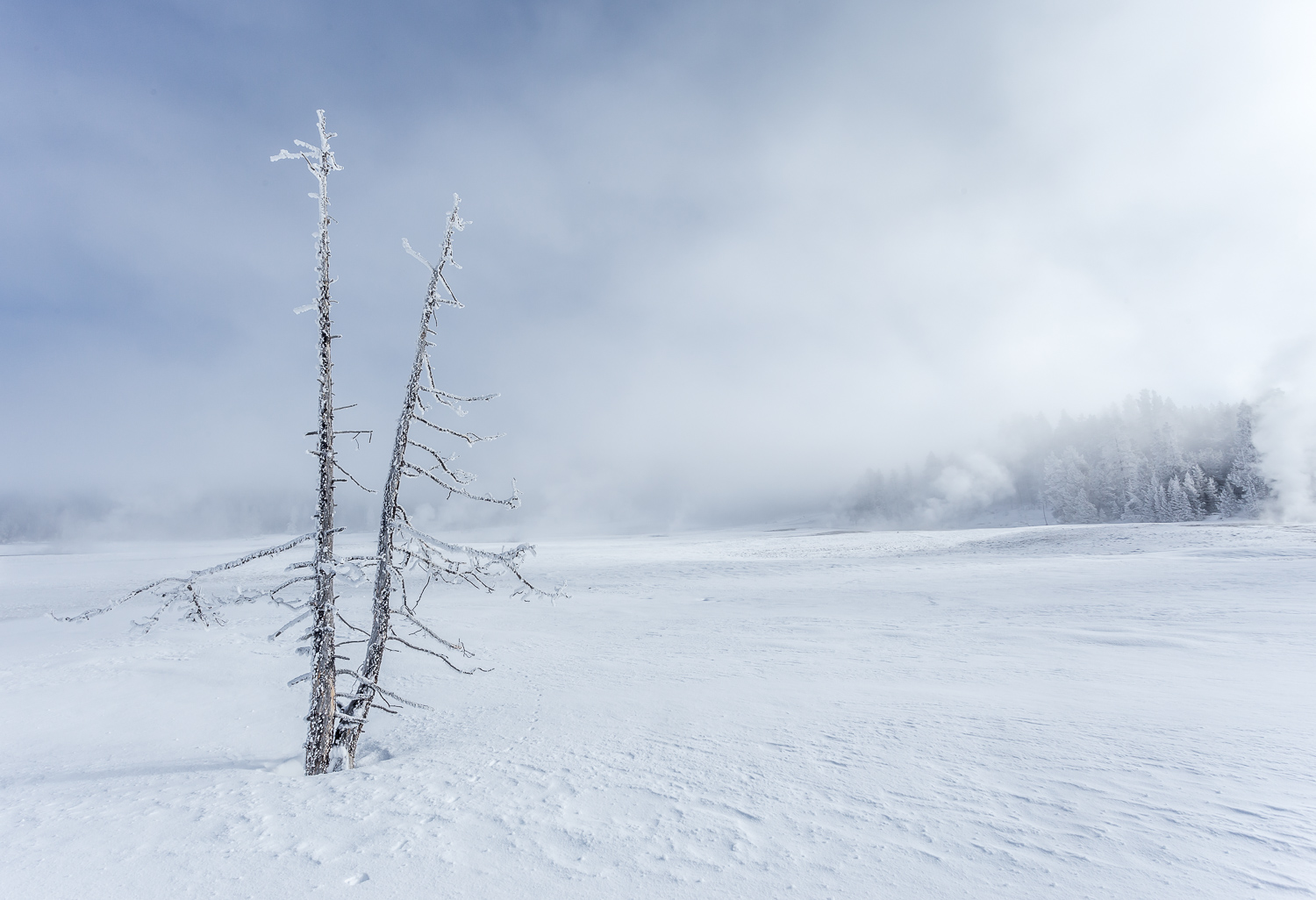 Image: This bitter cold day in Yellowstone National Park had a high-key look already, and minimal ed...