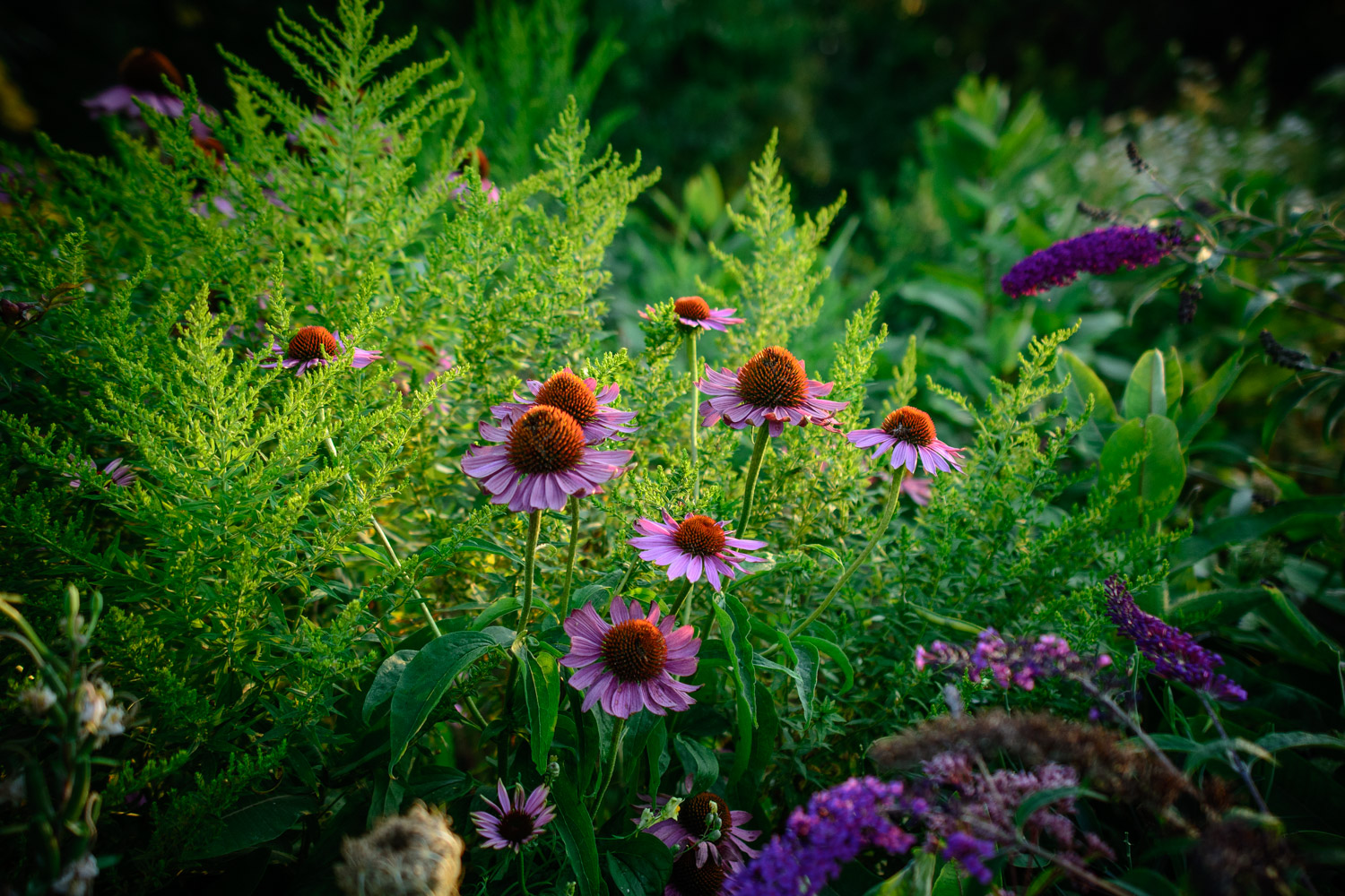 Image: When I first got my camera, I would take pictures of flowers. I was never happy with the phot...