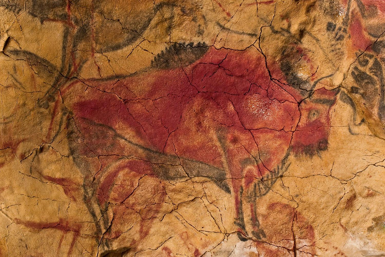 图像:在西班牙阿尔塔米拉洞穴墙上的红色野牛。图片来源:Museo de Altamira和D. Rod ...