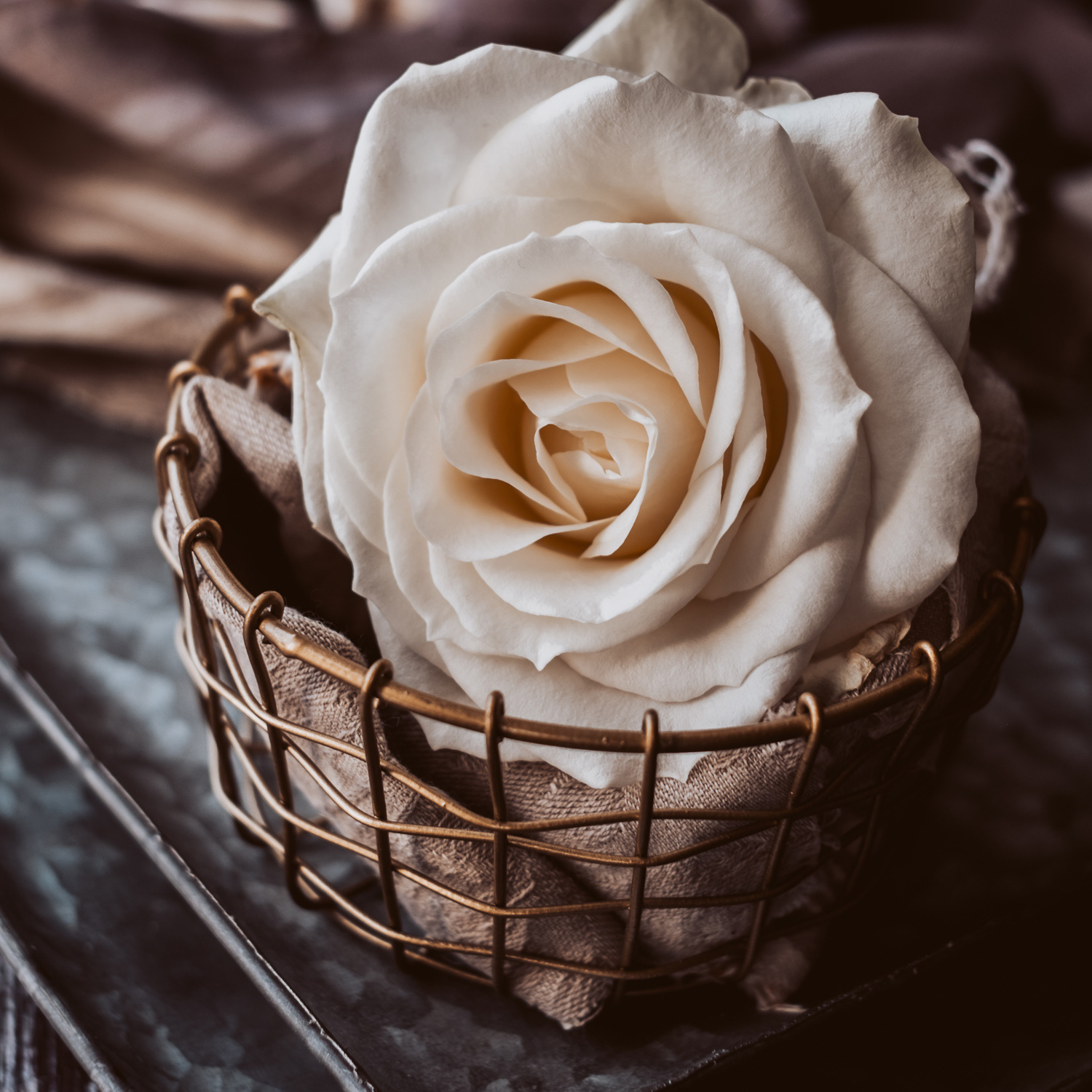 White rose in a gold basket. 2 - Can New Gear Kickstart Your Photography - Charlie Moss