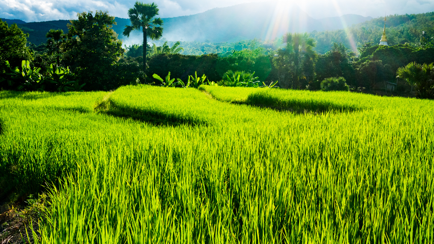 How to Make Well Exposed Photos Every Time Rice Fields