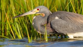 Weekly Photography Challenge – Birds