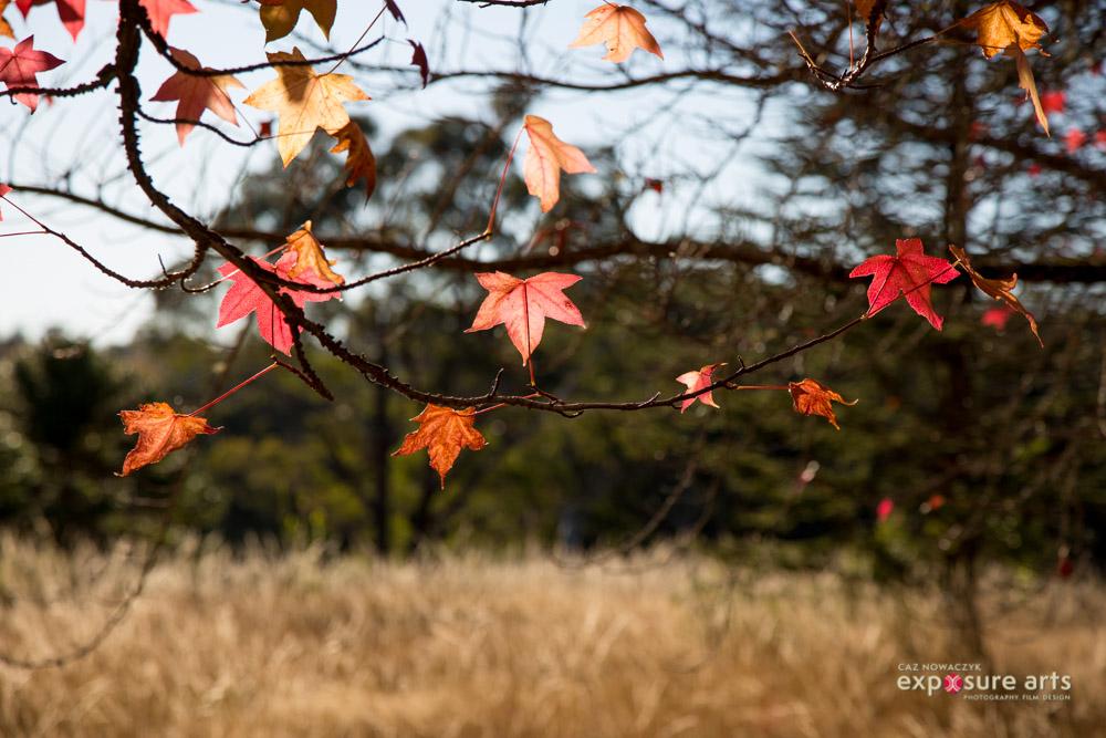 https://i1.wp.com/digital-photography-school.com/wp-content/uploads/2019/03/mt-wilson-autumn-by-caz-nowaczyk-18-web.jpg?resize=1000%2C667&ssl=1
