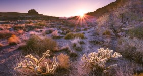 shooting-into-the-sun-digital-photography-school-adam-welch-1