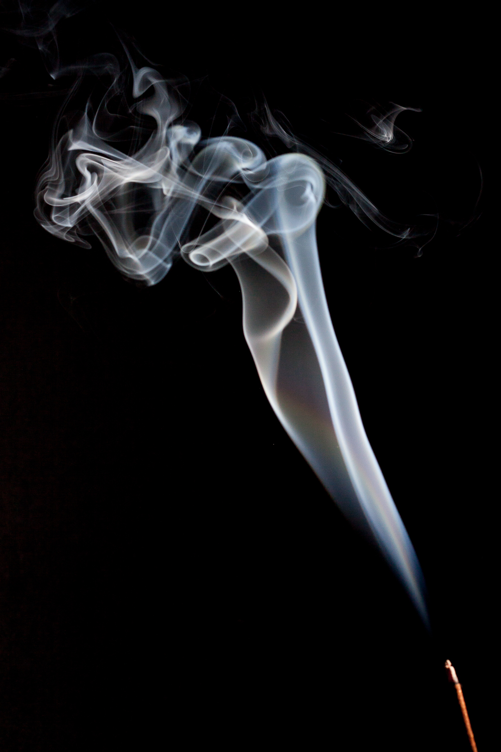 Abstract Smoke Photography - The Seahorse