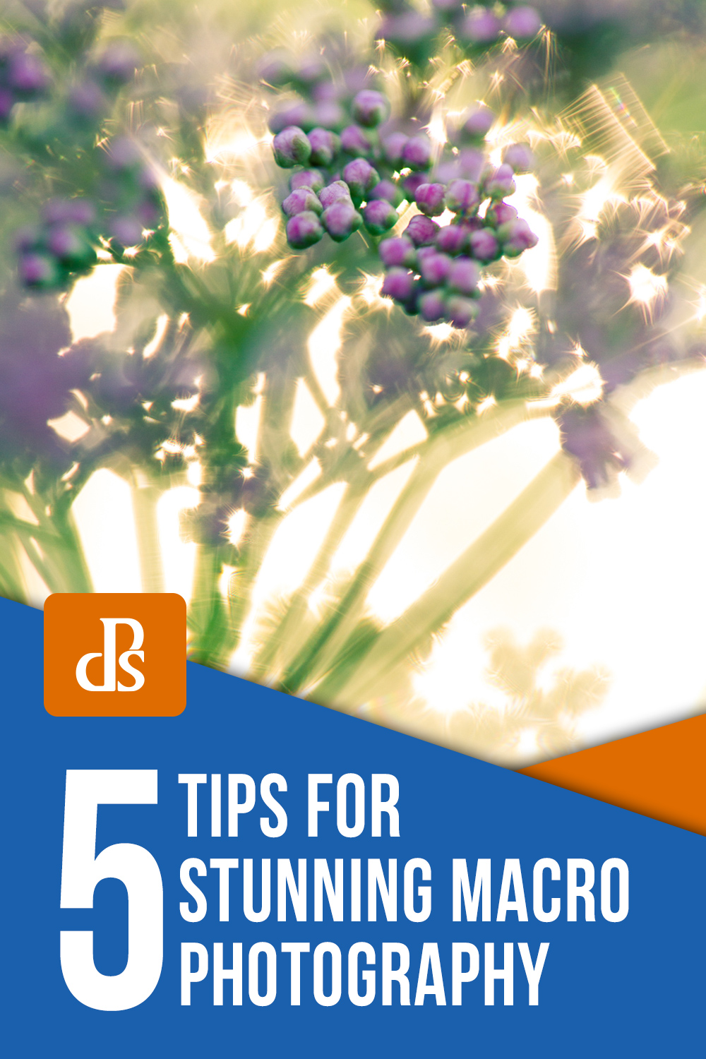 5 Tips for Stunning Macro Photography