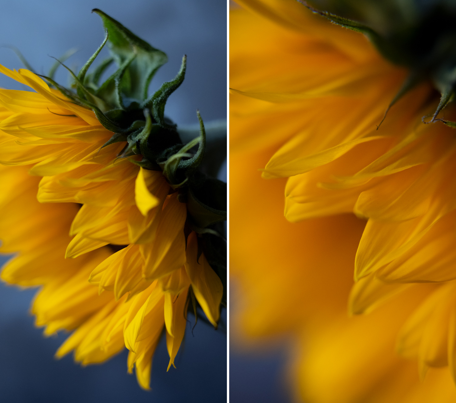 using-close-up-filters-for-flower-photography