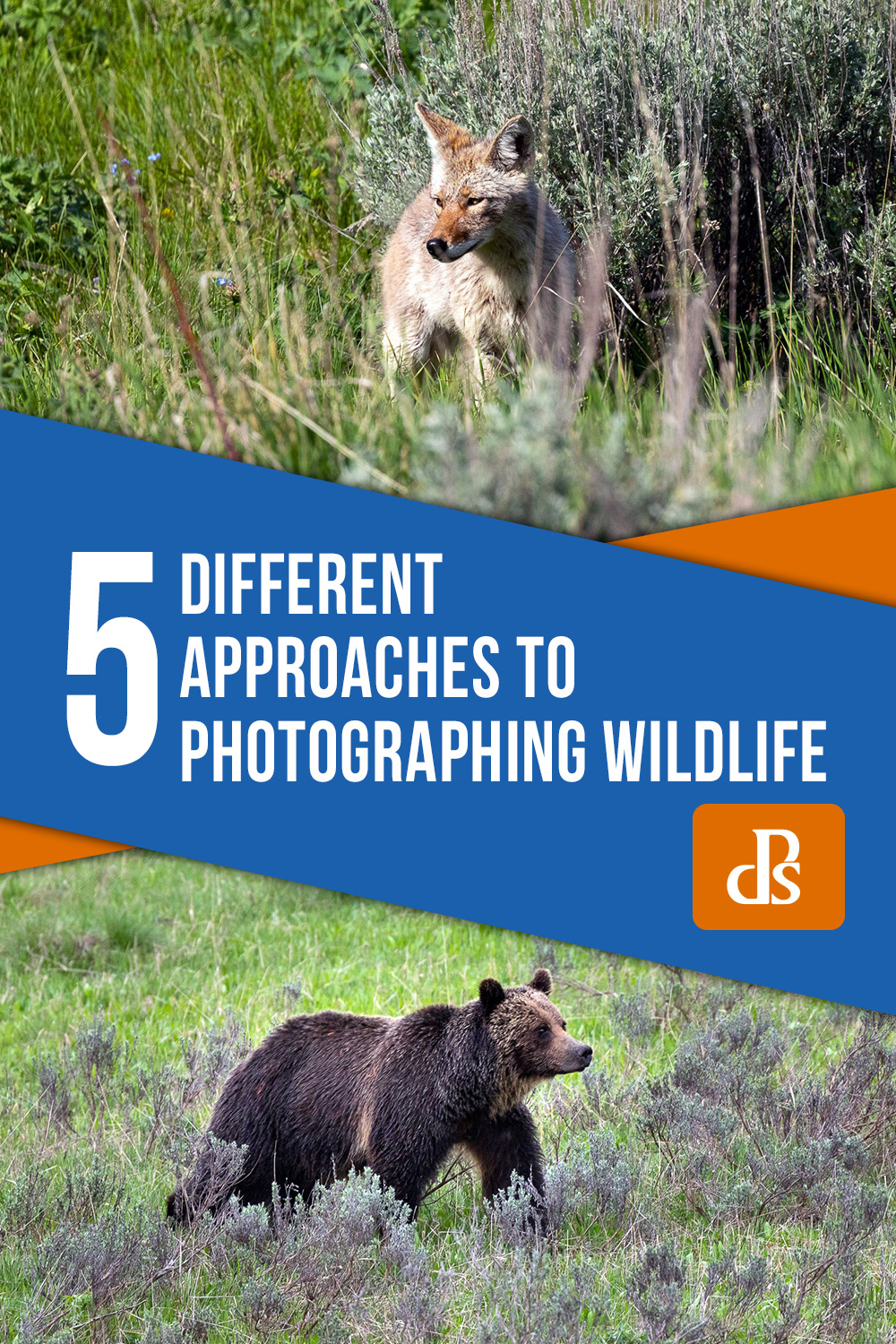 photographing-wildlife