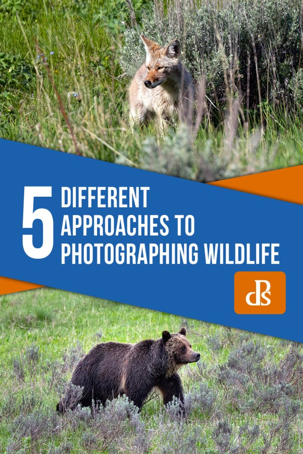5 Different Approaches to Photographing Wildlife