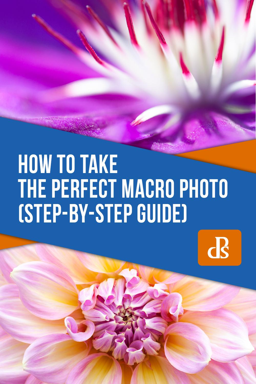 how-to-take-the-perfect-macro-photo