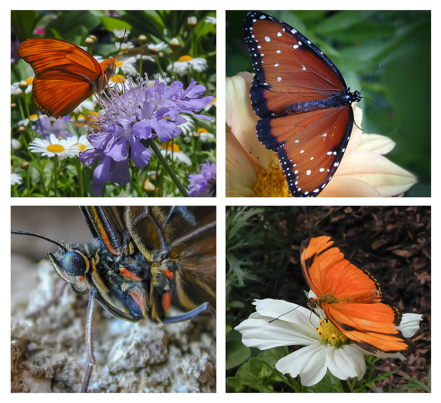 Image: Sometimes zoos will have a butterfly exhibit. If where you're going has one, take a mac...