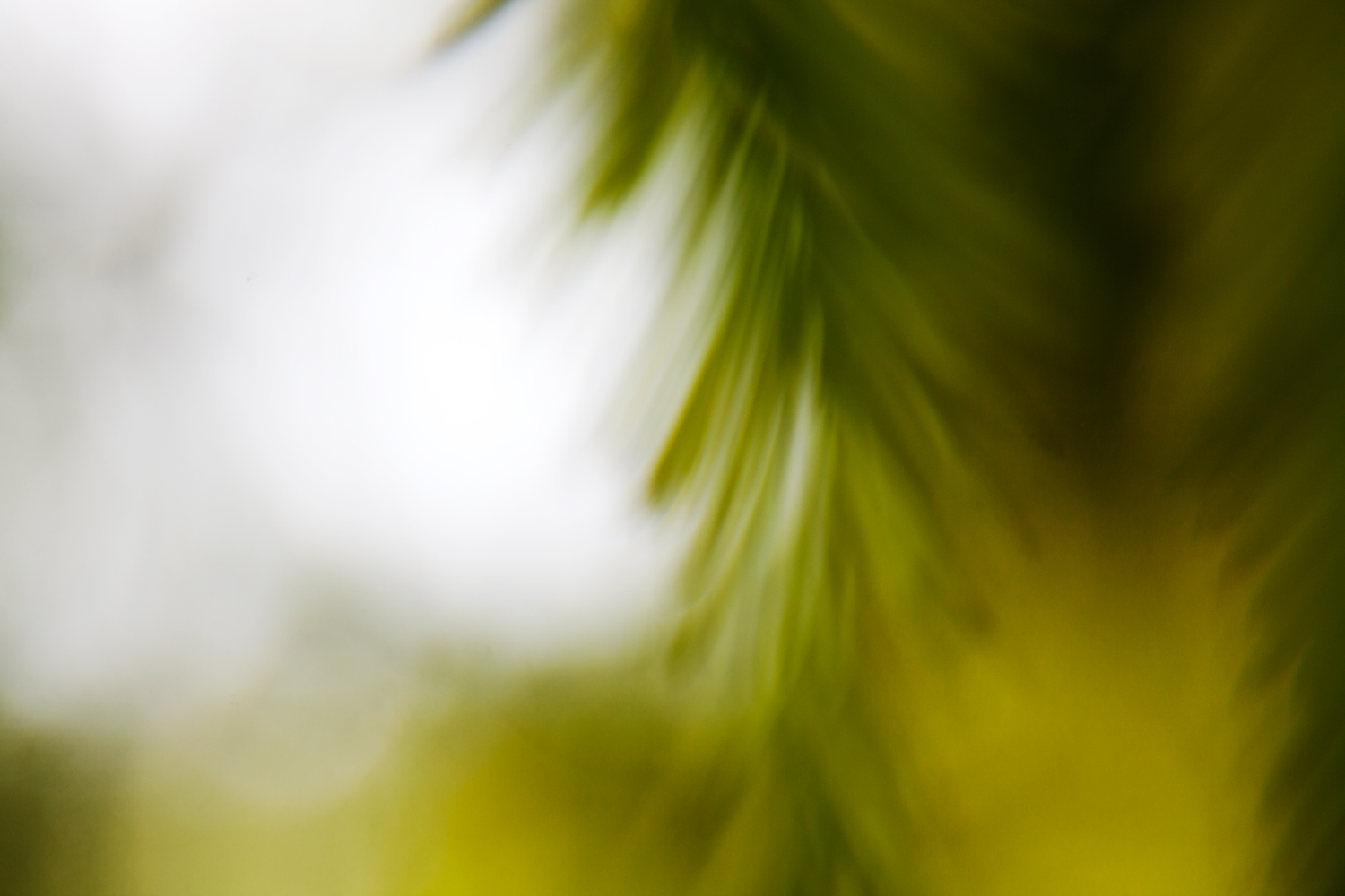 blurry-and-unfocused-photos
