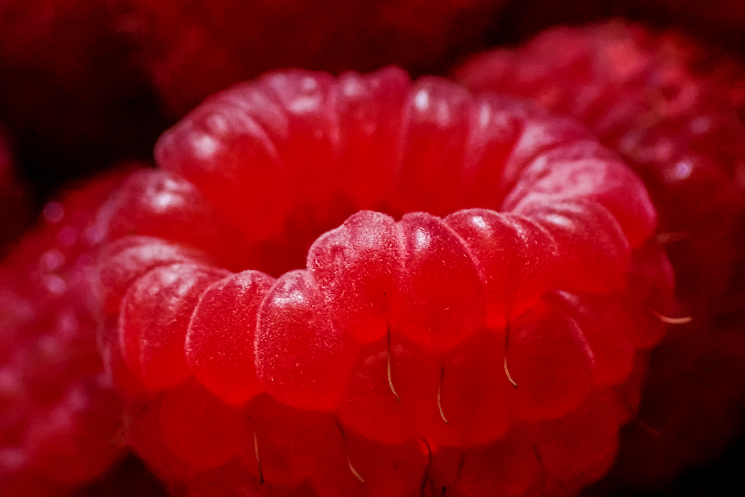 Berry macro photography