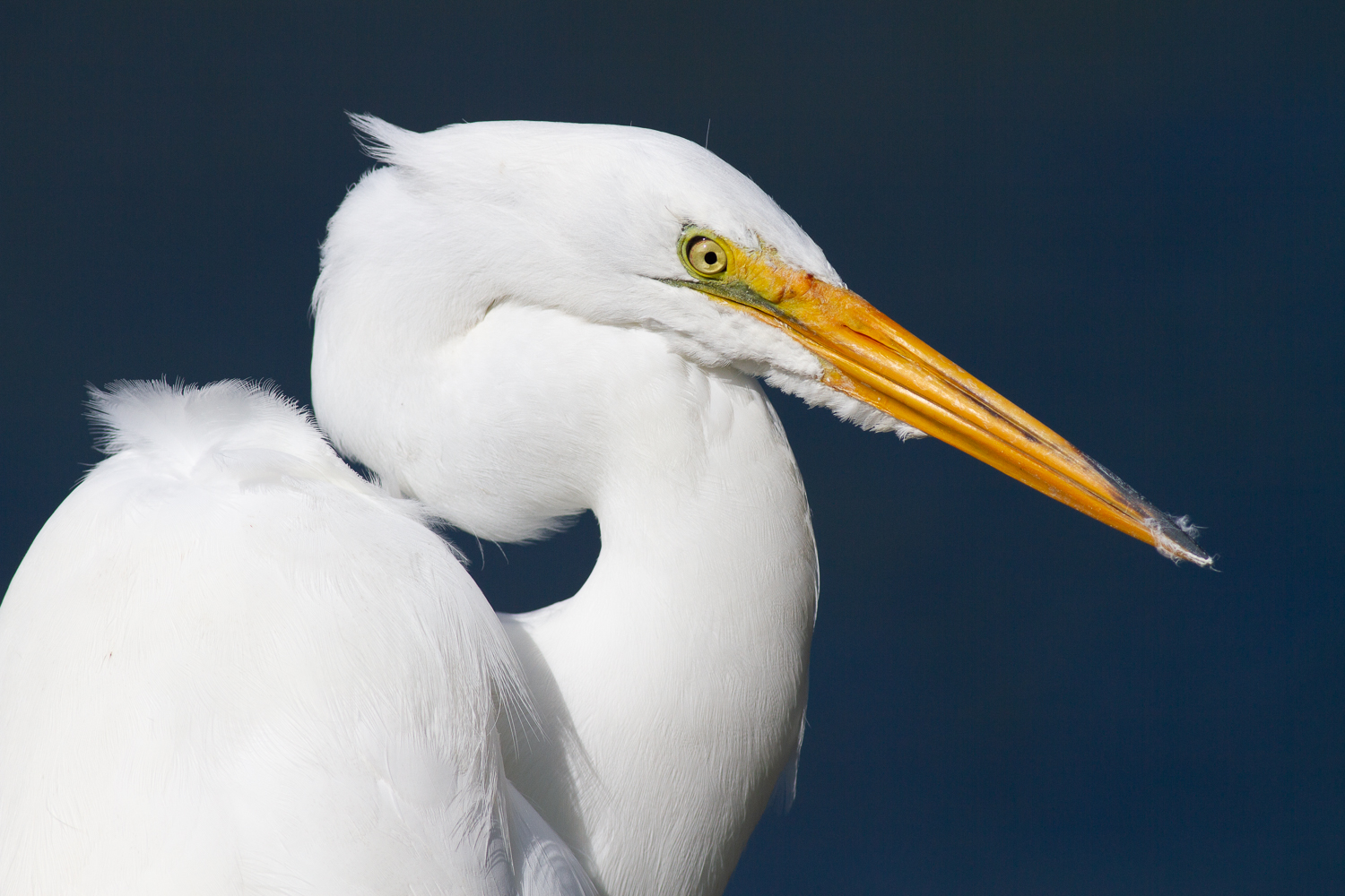 A Quick Guide to Amazing Bird Photography Compositions