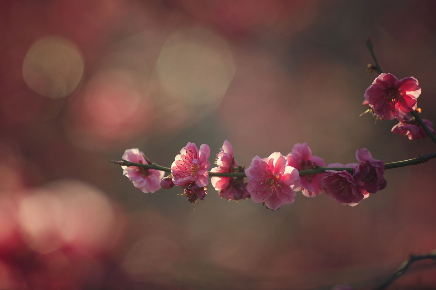 Image: This photo shows bokeh created using a prime lens.