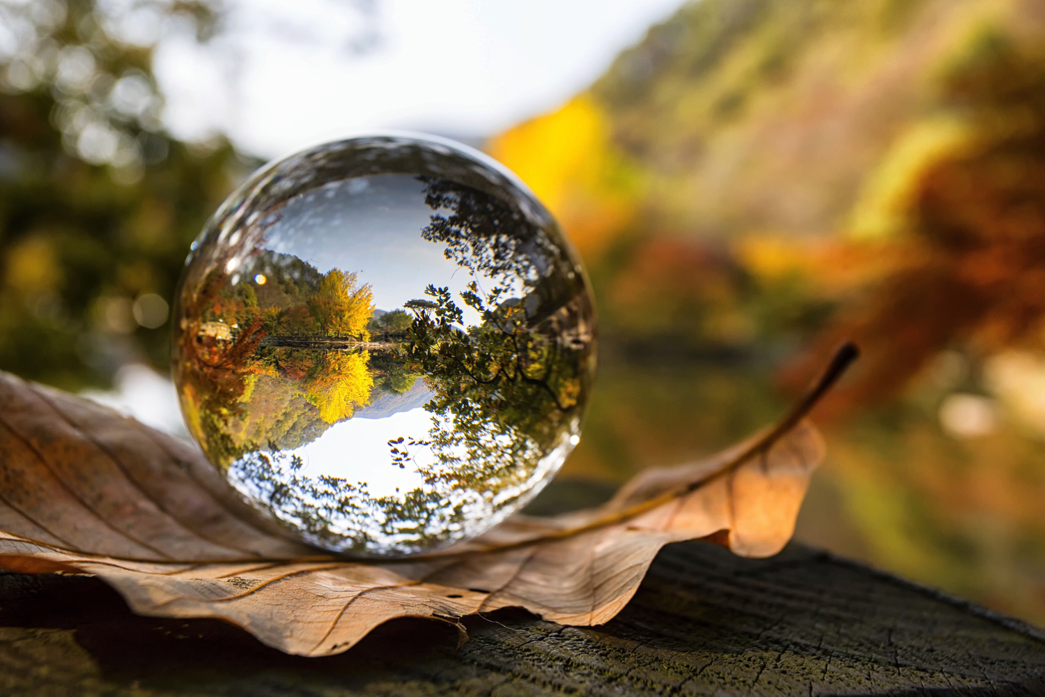 great-pieces-of-camera-equipment-lensball