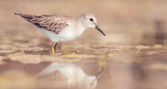 camera-settings-bird-photography