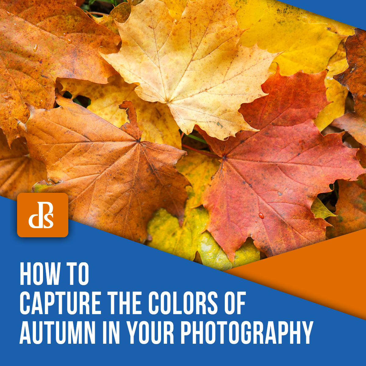 capture-colors-of-autumn-in-photography