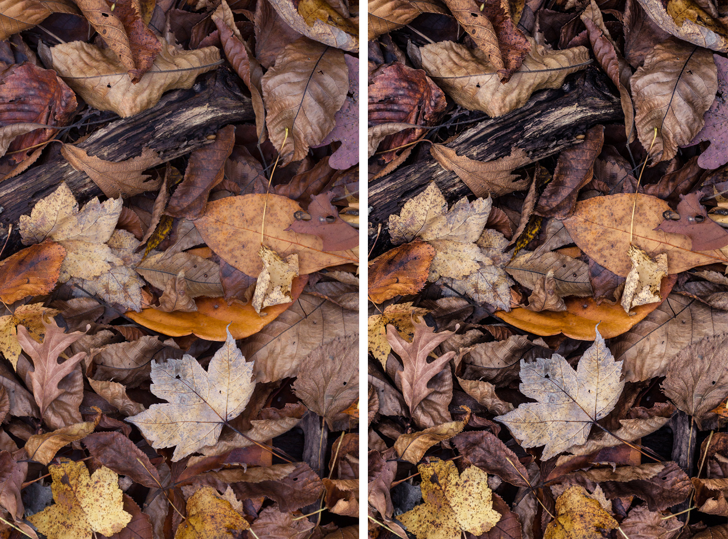 make-your-photos-pop-clarity-before-after
