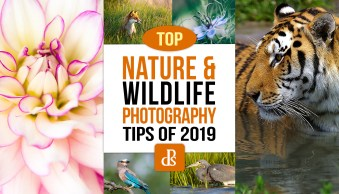 The dPS Top Nature and Wildlife Photography Tips of 2019