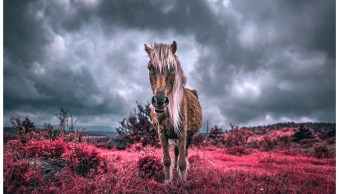 Simulating False-Color Infrared Photography in Photoshop
