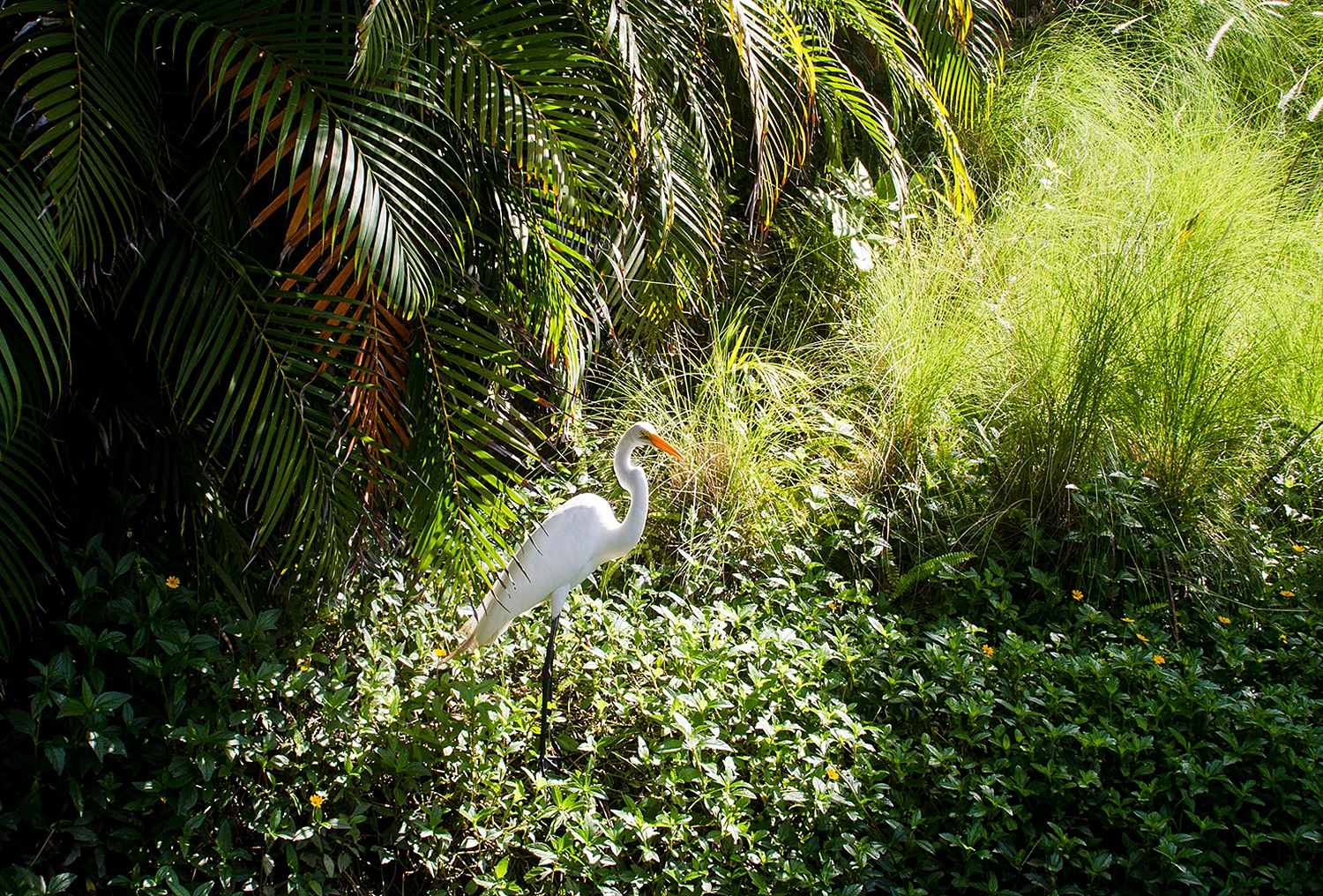 Image: To capture the bird and the landscape surrounding it, we used an aperture of f/9. Other camer...