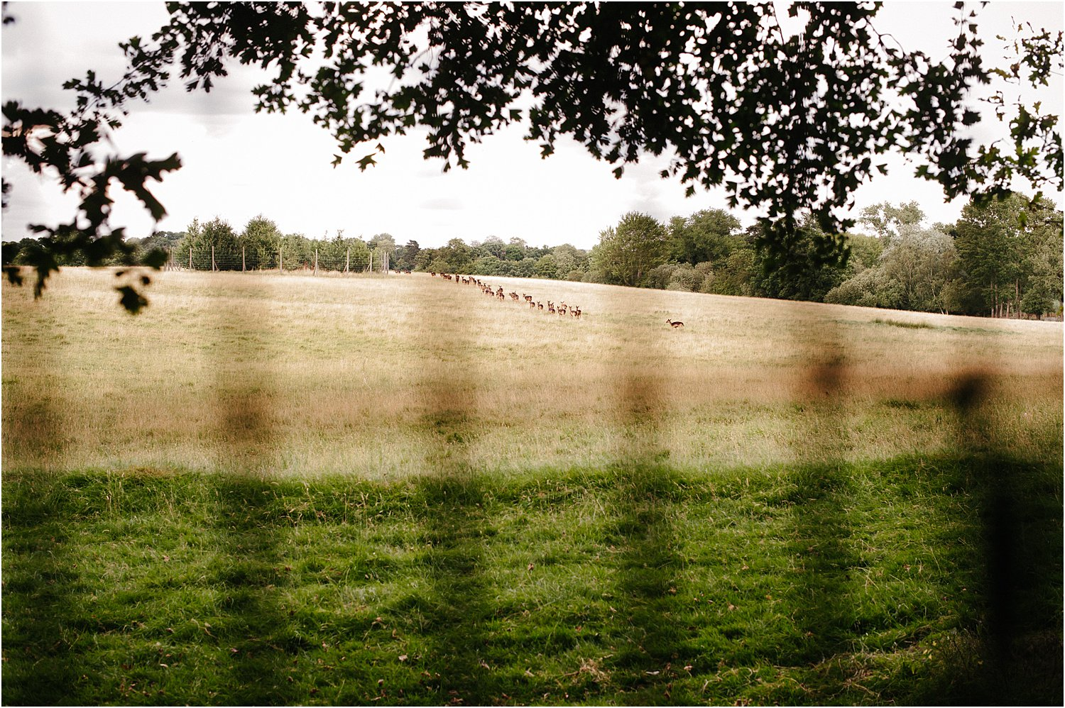 Photo by Lily Sawyer – A picture of a field taken through a wire fence.