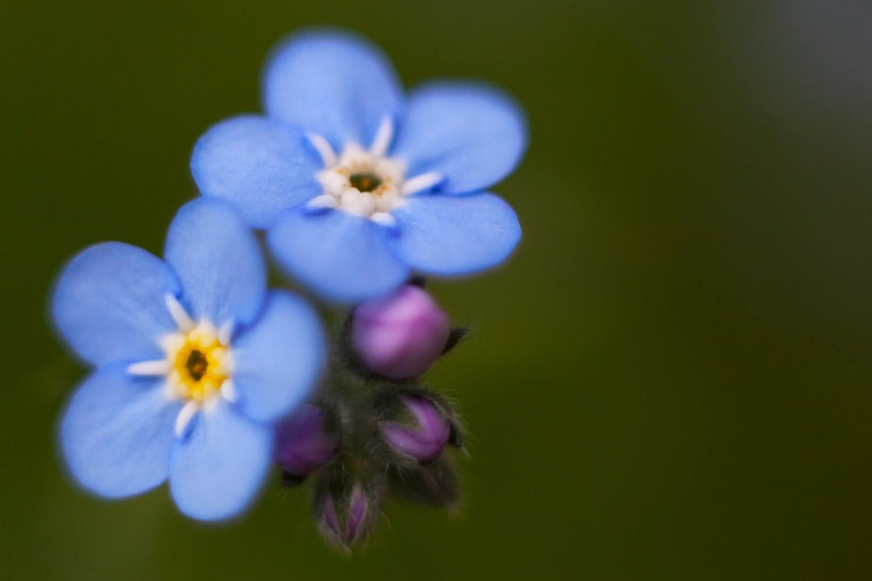 https://i1.wp.com/digital-photography-school.com/wp-content/uploads/2020/02/radial_composition_flowers.jpg?resize=1500%2C1000&ssl=1