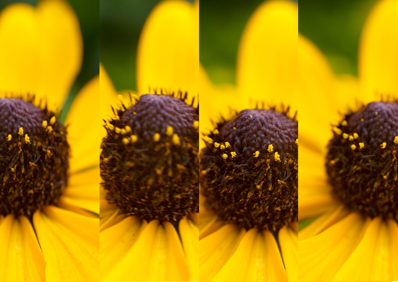 O que é o modo burst e como ele pode beneficiar sua fotografia?