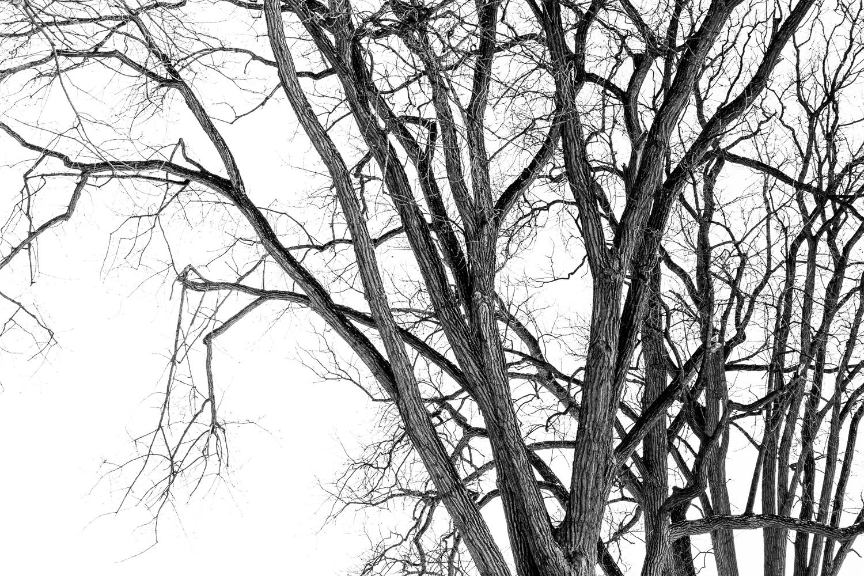 árvores capturadas na caminhada