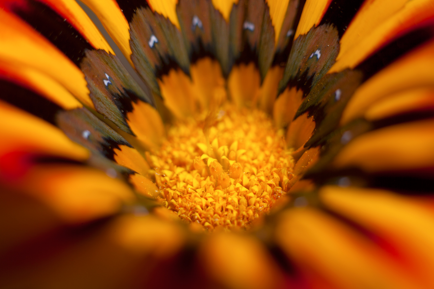 ways photography can ease anxiety flower