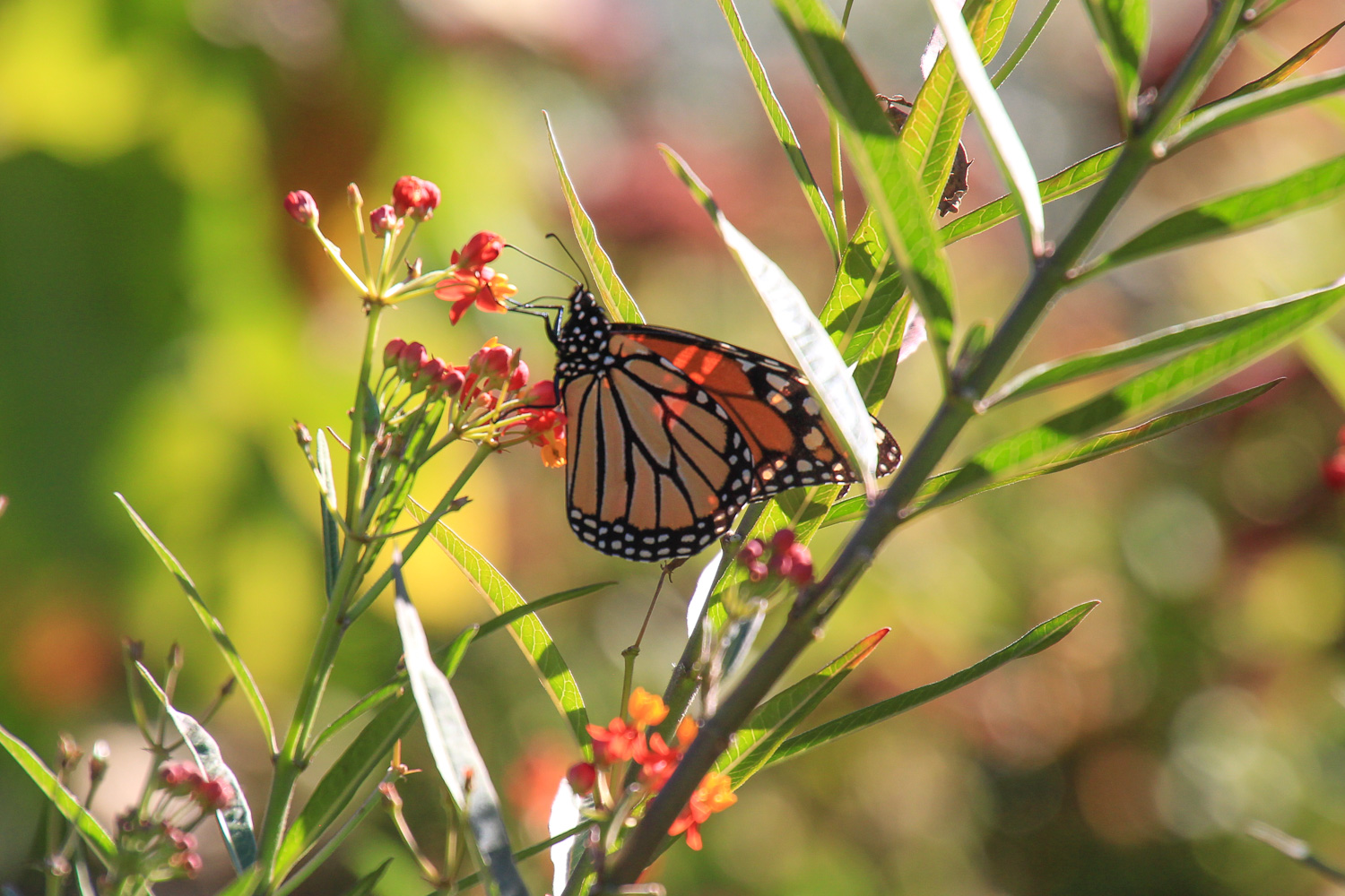 beginner photography tips – a butterfly on flowers