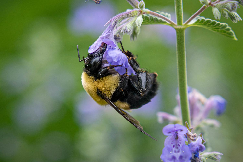 backyard photo safari bee