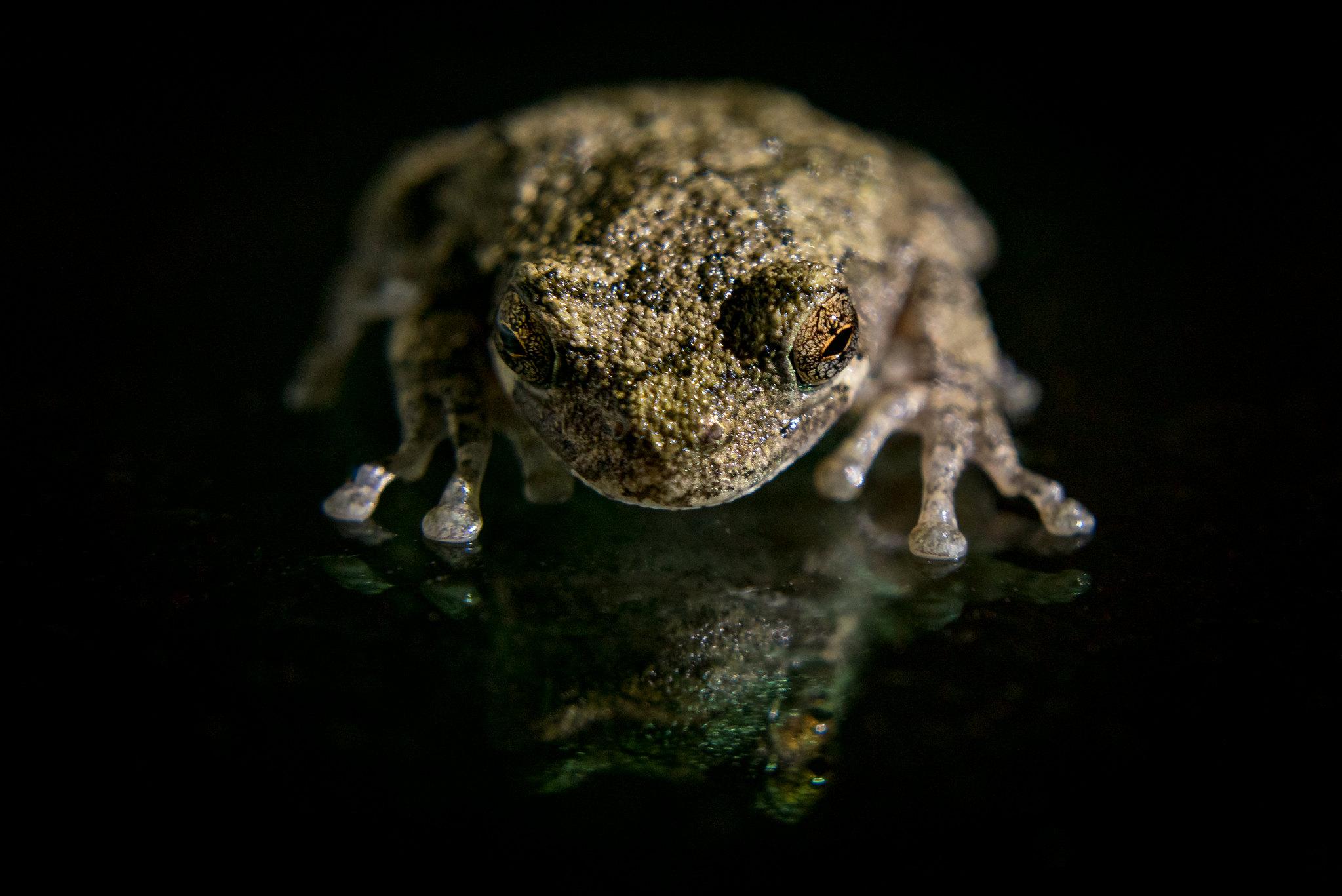 backyard photo safari frog