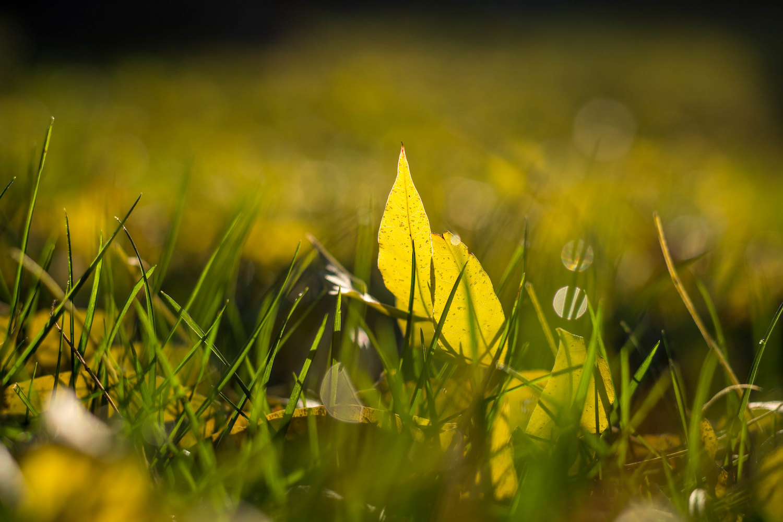 backyard photo safari leaf on ground