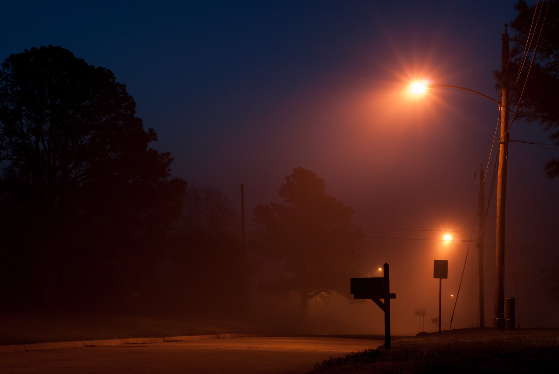 backyard photo safari foggy morning