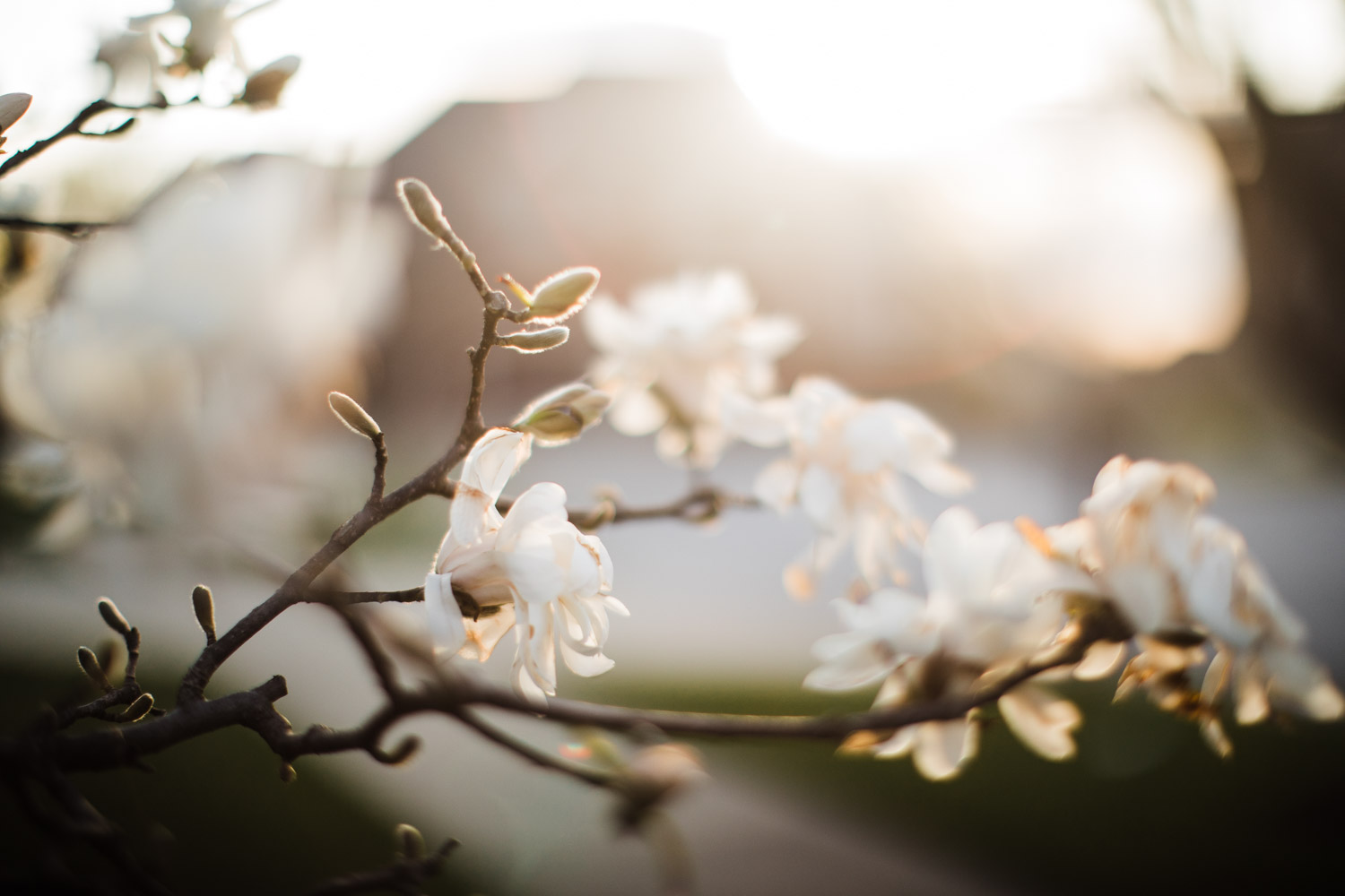 Freelensing for Creative Photography