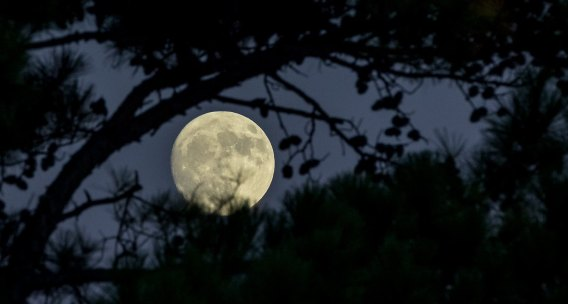 moon-editing-tips-through-trees