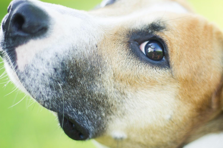 imagem de cachorro capturada no modo AF-C