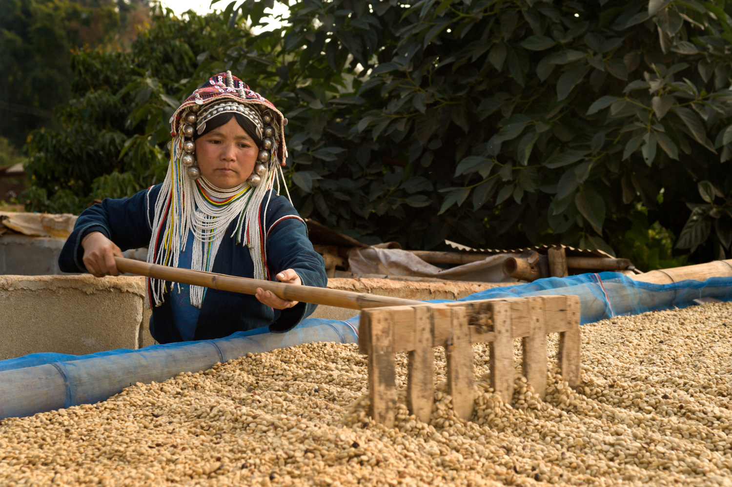 Akha woman drying coffee for curiosity and knowledge in photography