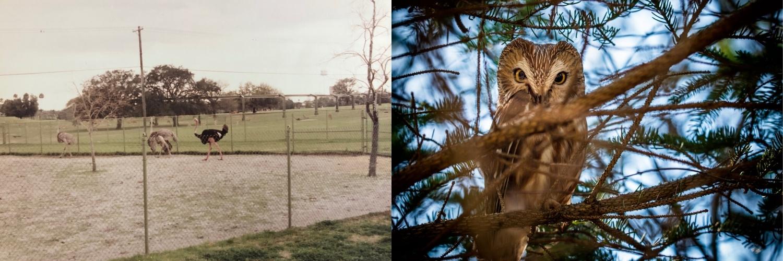 Marie Costanza antes e depois dos pássaros