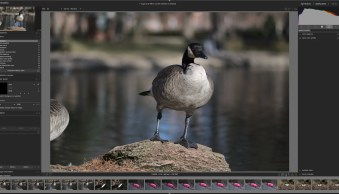Darktable: Is This Free Lightroom Alternative Right for You?