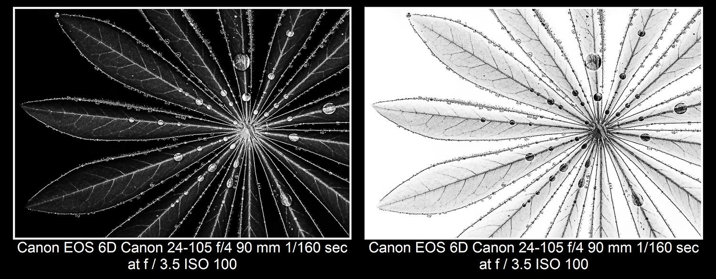 Lupine leaf macro