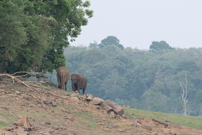 two elephants before the Dehaze tool is used