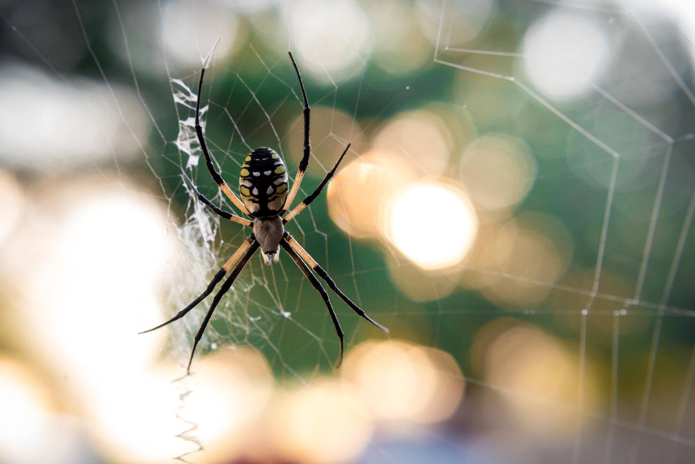 Backlighting spider