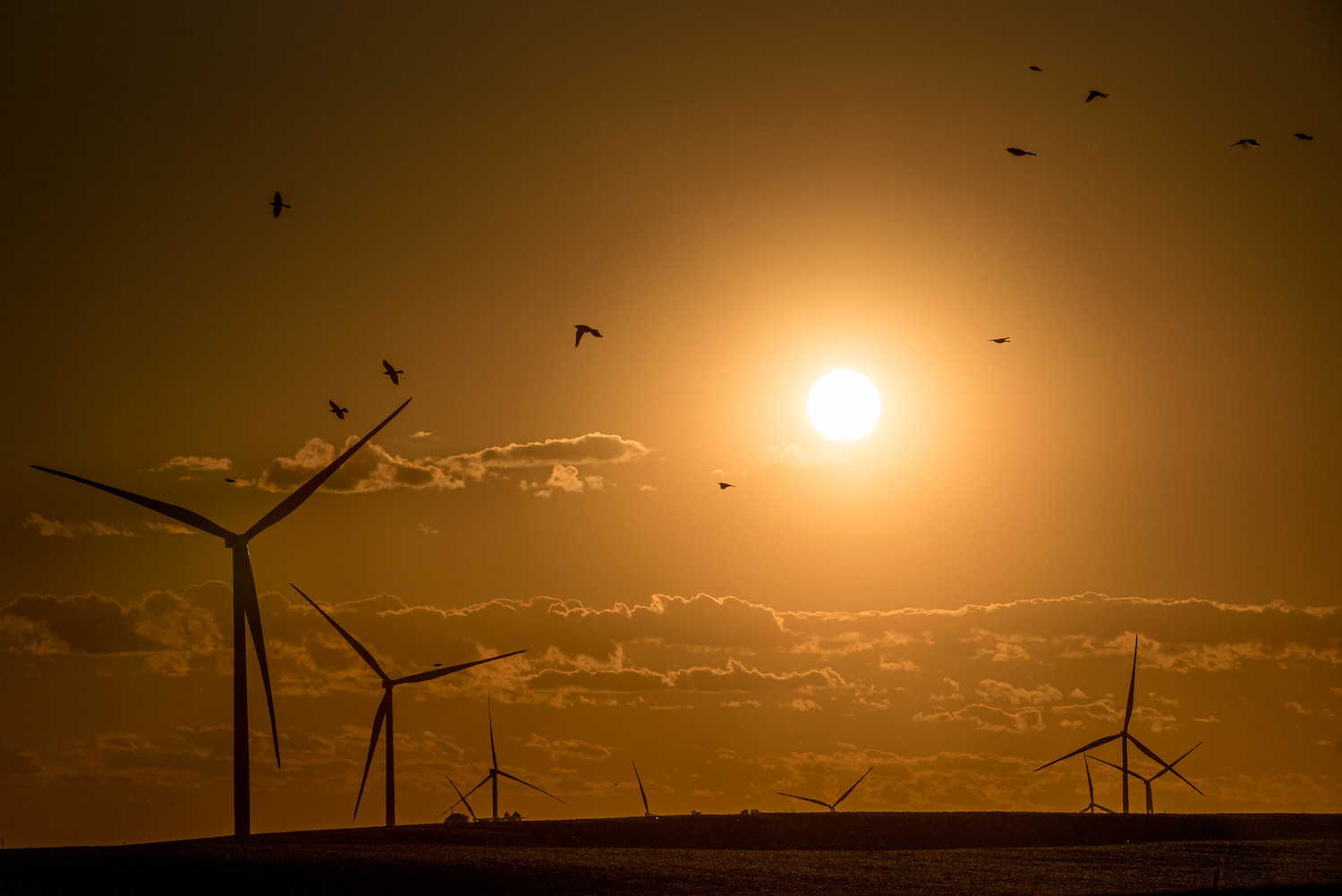 Backlighting sunset wind turbines